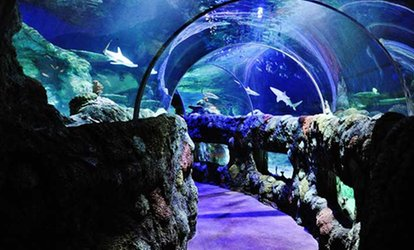 Aquarium Admission at Sea Life Kansas City Aquarium (Up to 25% Off). Four Options Available.