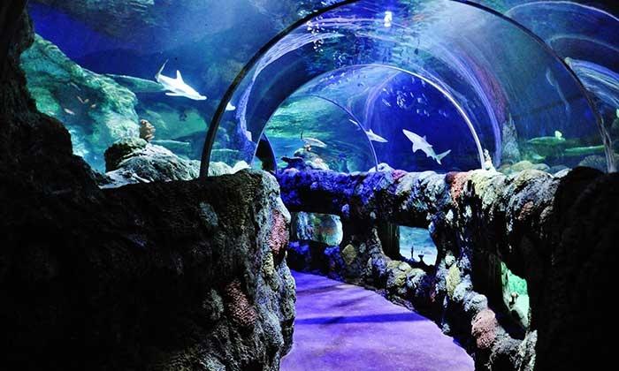 SEA LIFE Charlotte-Concord - Concord: $10.95 for Admission for One to Sea Life Charlotte-Concord Aquarium ($21.35 Value)