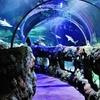 25% Off Aquarium Visit