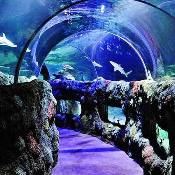 Sea Life Kansas City Aquarium - Up To 19% Off - Kansas City, MO | Groupon