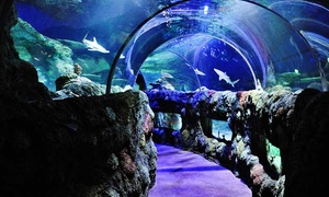 Up to 44% Off Admission to SEA LIFE Charlotte-Concord at SEA LIFE Charlotte-Concord, plus 6.0% Cash Back from Ebates.