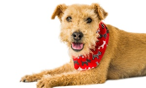 Maz of Leicester: Pet and Family Photoshoot Package with Prints at Maz of Leicester (Up to 94% Off)