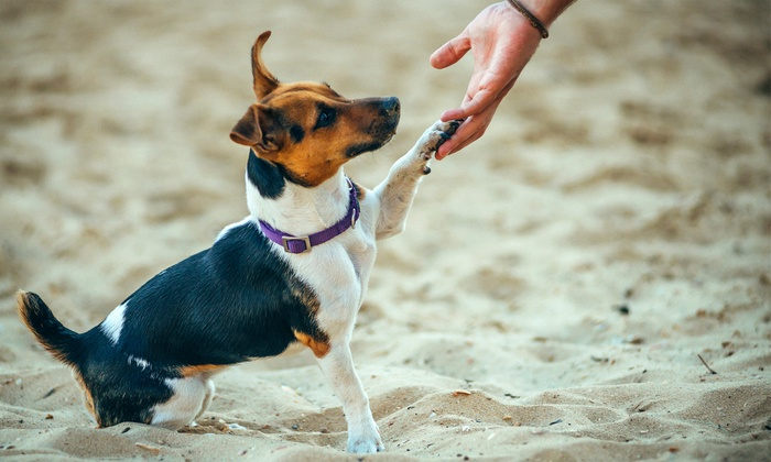 International Open Academy: Online Animal Training and Pet Sitting Course with International Open Academy (94% Off)