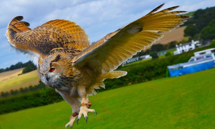 80% Off – Birds of Prey or Owl Encounter Experience – Milton Keynes (£15 at Groupon)