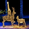 Up to 42% Off Little Rock Zoo Holidays in the Wild Admission