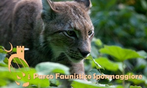 Parco Faunistico di Spormaggiore: Parco Faunistico Spormaggiore: ingressi adulti e bambini, per conoscere la natura del Trentino (sconto fino a 39%)