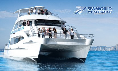 2.5-Hour Whale Watching Tour for $69 with Sea World Whale Watch, Gold Coast (Up to $99 Value)