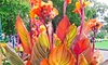 Pre-Order: Tropical Variegated Canna Phaison Flower Bulbs (3-Pack)