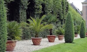 Mix 3 palmiers