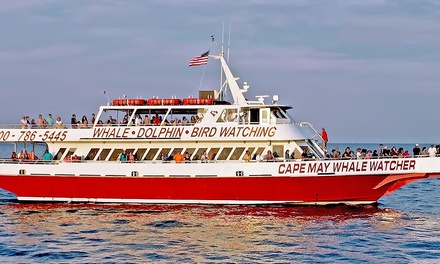 Whale-and Dolphin-Watching Tours at Cape May Whale Watcher (Up to 45% Off). Six Options Available.