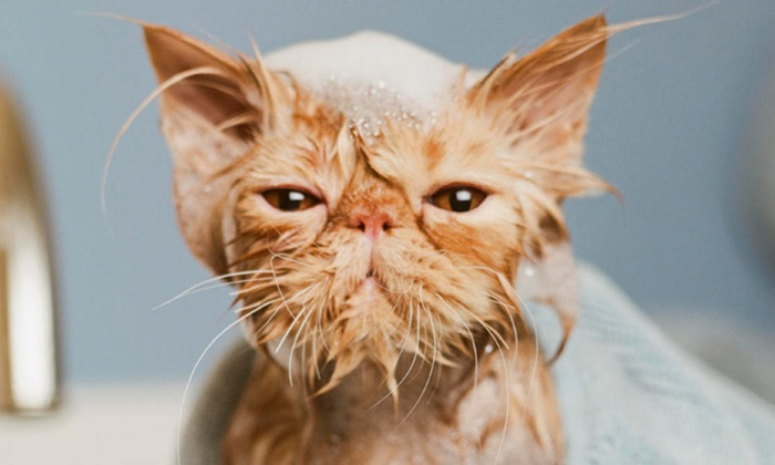 spokane paw prints - Chief Garry Park: Cat Grooming Services (27% Off)