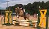 Up to 16% Horseback Riding at JGS Riding