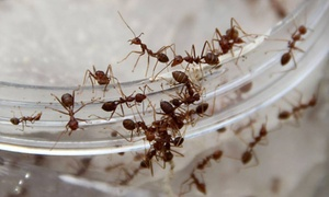 Frontier Pest Control: $80 for $149 Worth of Services — Frontier Pest Control