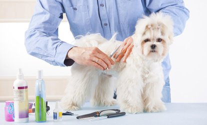 $5 for an Online Dog-Grooming Course at Holly and Hugo ($175 Value)