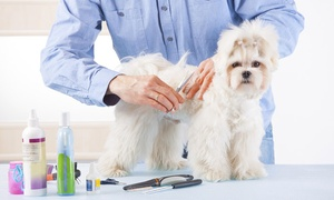 Online Dog-Grooming Course: $5 for an Online Dog-Grooming Course at Holly and Hugo ($175 Value)