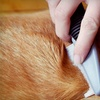 Up to 52% Off Dog Grooming at Fur Kids Daycare