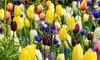 Voorjaarsbloembollen