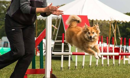 image for One or Three 30-Minute Agility Lessons, or One 60-Minute Agility Lesson at Crossgate Canines (Up to 60% Off)