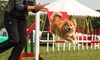 Crossgate Canines - Donington: One or Three 30-Minute Agility Lessons, or One 60-Minute Agility Lesson at Crossgate Canines (Up to 60% Off)
