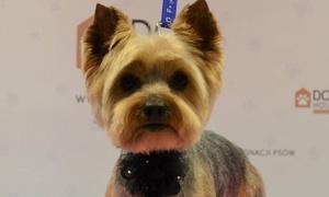 Dog House Fryzjer dla Psów: Pakiet usług pielęgnacyjnych dla psa od 59,99 zł w Dog House Fryzjer Dla Psów