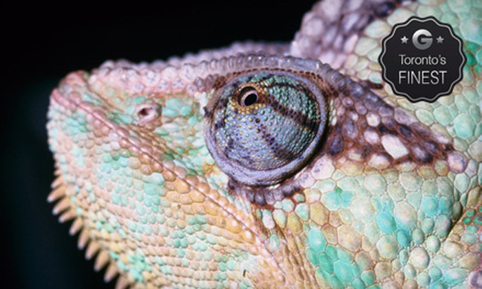 Reptilia - Vaughan: $7 for a Reptile-Zoo Visit at Reptilia (Up to $15 Value)
