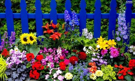 Set de 200 o 400 bulbos de flores de verano