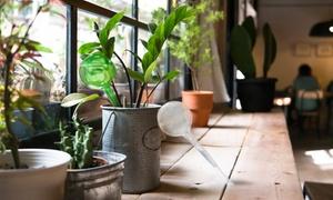 Patio Amp Garden Deals Amp Coupons Groupon