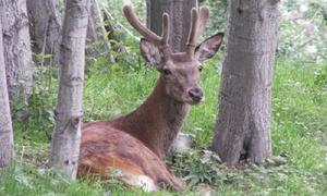 Parc Animalier d'Introd: Parc Animalier d'Introd - ingressi per adulti e bambini al parco faunistico (sconto fino a 41%)