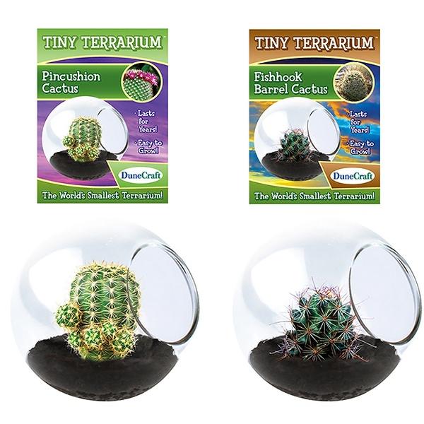 Tiny Cactus Terrarium