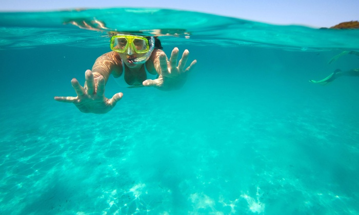 Go Nuts Hawaii - Waikiki: North Shore Turtle Snorkeling Tour for Four or Up to Eight from Go Nuts Hawaii (Up to 47% Off)