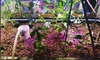 Art of Aquaponics - Central Islip: $275 for $500 Worth of Services — Art of Aquaponics
