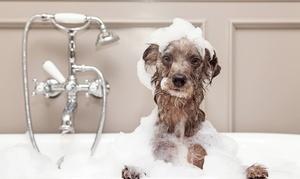 Pupil Spa: Rozczesywanie sierści, kąpiel i strzyżenie psa od 49,99 zł w salonie Pupil Spa (do -55%)