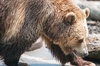 Up to 19% Off on Zoo / Animal Park at Chahinkapa Zoo