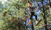 Up to 23% Off Course at Flagstaff Extreme Adventure Course