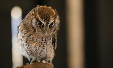 Owl Encounter for One or Two at Yarak Birds of Prey (Up to 55% Off)