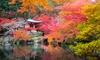 4er- oder 8er-Set japanische Ahorne