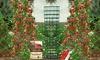 Kletter-Erdbeeren mit Rankturm