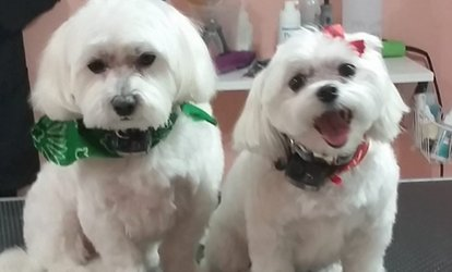 Full Grooming or Bath with Nail Trim at Dirty Dog Solutions (Up to 45% Off). Six Options Available.