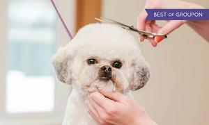 Salon Groomerski Wilczyca: Strzyżenie psa od 39,99 zł i więcej w Salonie Groomerskim Wilczyca