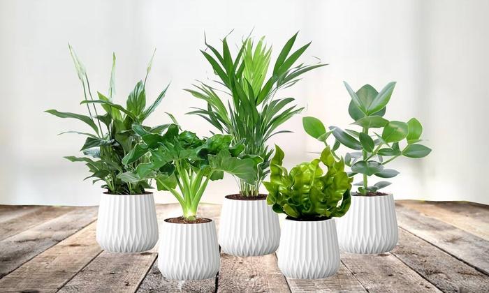 5 Plantes Depolluantes 30 40 Cm Groupon Shopping