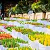 Free Event: Tulipmania