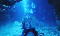 四季を通じて楽しめるダイビングで、美しい海を体感≪体験ダイブ or オーシャンダイバーコース5日間≫ @Dive Paradise QU...