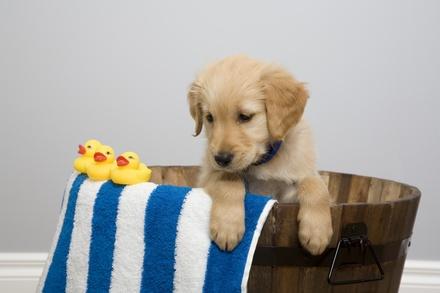 Sesión de peluquería para un perro de hasta 7, 15 o más kg desde 16,95 € en Mascota Real