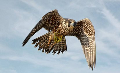 General Admission for Two, Four, or Six to Audubon Center For Birds of Prey (Up to 48% Off)