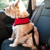 Car Seat Belt Clip for Pets (1 or 2-pack)