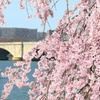 Up to 41% Off Cherry Blossom Boat Tour from DC Cruises