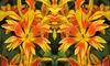 Tulipe Fire Wings