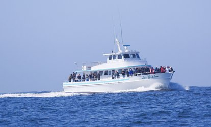 Up to 23% Off Whale Watching at Sea Goddess Whale Watching