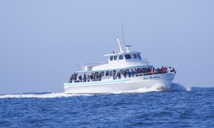 Up to 23% Off Whale Watching at Sea Goddess Whale Watching at Sea Goddess Whale Watching, plus 6.0% Cash Back from Ebates.