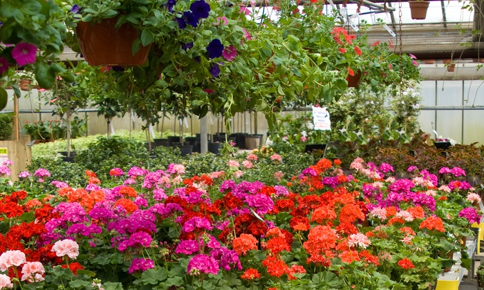 McAuslan's Nursery - Snohomish: Up to 50% Off Lawn & Garden — McAuslan's Nursery; Valid Wednesday - Sunday 8:30 AM - 5 PM